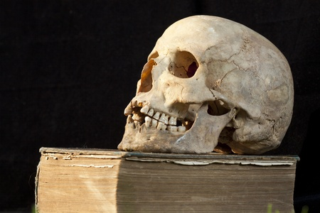 Real human skull on book Stock Photo - 8869011