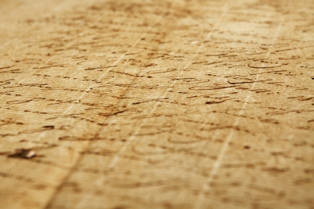 handwriting: Old handwriting, document from eighteen forty seven, narrow focus