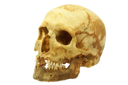 Real human skull isolated on white background photo