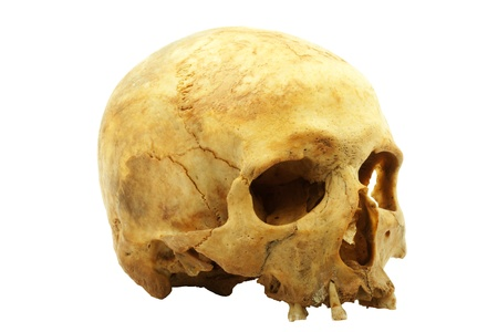 human skull: Real human skull isolated on white background