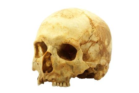 skull background: Real human skull isolated on white background