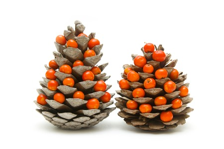 Cones and ashberry on white  photo