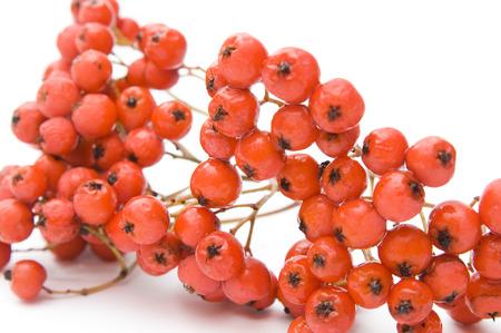 bunchy: Ashberry closeup