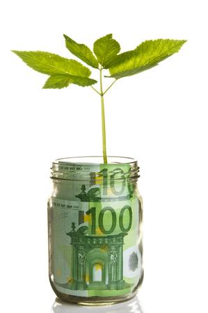 Sapling growing from euro bill photo