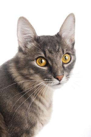 whiskar: Cat closeup on white background
