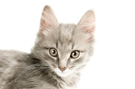 Pretty kitten closeup Stock Photo