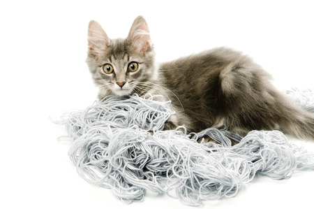 Kitten with a tangled yarn Stock Photo
