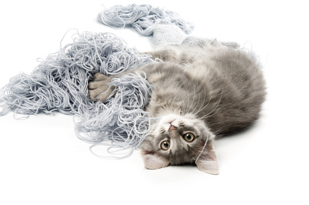 whiskar: Kitten  playing with yarn