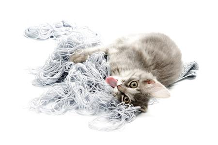 whiskar: Kitten with yarn