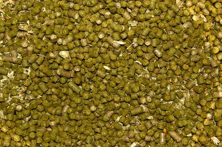 lupulus: Dried hops