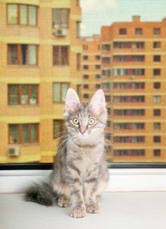 whiskar: Grey kitten sits on a sill