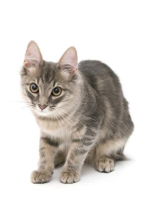 whiskar: Curious kitten closeup