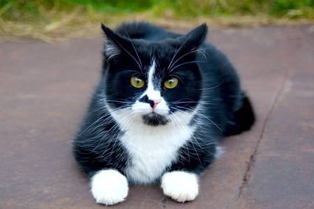 whiskar: Charming cat Stock Photo