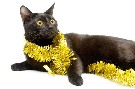 Black kitten and tinsel photo