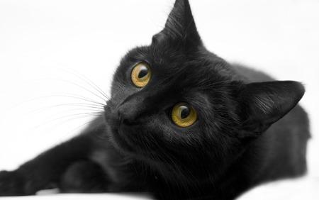 whiskar: Pretty kitten on white