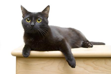 Black kitten on chest