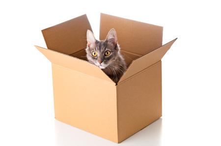 Pretty cat in cardboard box on white  Foto de archivo