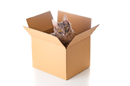 Adorable kitten in cardboard box Standard-Bild