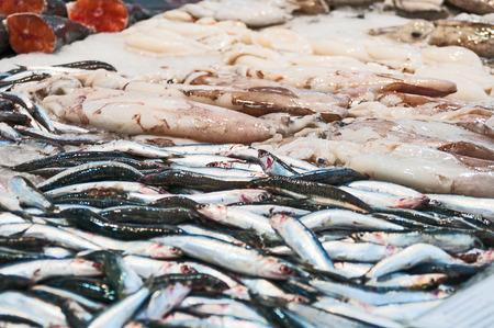 squids: Freshness  sardines and squids on ice Stock Photo