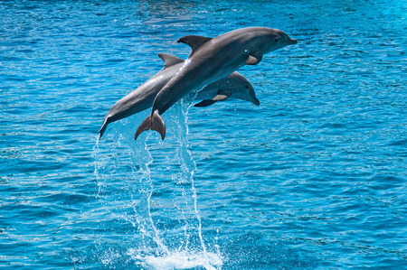 Two dolphins jump above blue water