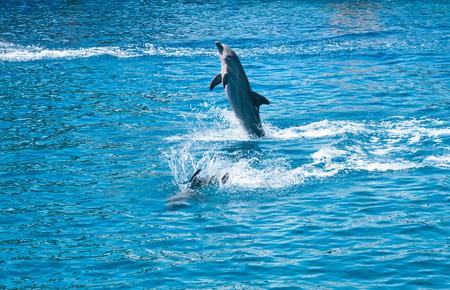delfin: Delfiny w akwarium