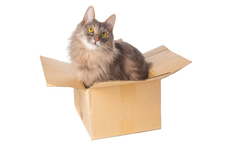 Gray cat in cardboard box on white background