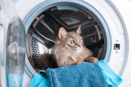 Waschmaschine und pelzige graue Katze drinnen