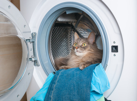 Washing machine and furry gray cat inside