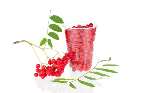 Red ripe ashberry isolated on white background
