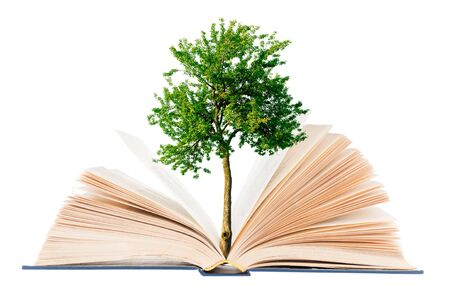Tree growing from open book on white background Banco de Imagens