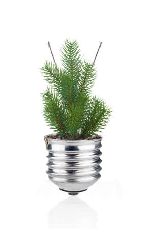 Fir tree with light bulb as ecological concept on white background