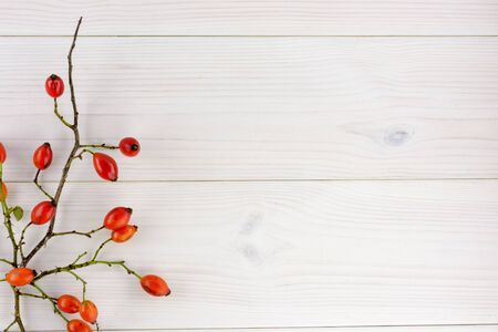 Red rosehips on the white wooden table autumn background 版權商用圖片