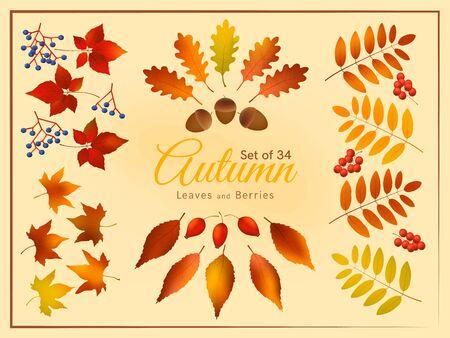 Colorful autumn leaves and berries set, autumn forest templates. 向量圖像