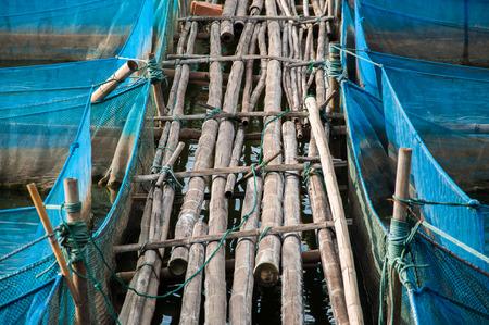 nile tilapia: Bamboo pathway of Nile tilapia Fish farms with blue net Stock Photo