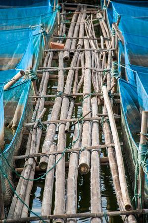 nile tilapia: Bamboo pathway and blue net of Nile tilapia Fish farms