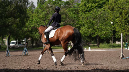 Young girl rider on brown horse in equestrian sport competition. Horse riding on the arena. Dressage test. Equestrian competitions, horse detour. Girl jockey on a horse on a sunny summer day