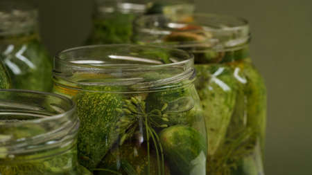 Closeup glass jars filled with fresh cucumbers, dill, garlic and black pepper and poured with brine green background.Canning, pickling fermenting vegetables.Homemade pickling cucumber recipes.Copy space