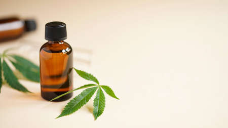 Medical Marijuana Cannabis oil extract in bottle green hemp leaves and glass test tubes beige background.Close-up glass bottles with CBD oil, THC tincture and hemp leaves.Cosmetics CBD oil.Copy space