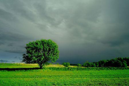 Green wood photo