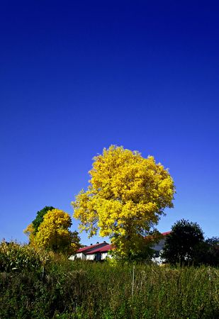 Yellow tree Stock Photo - 3617579