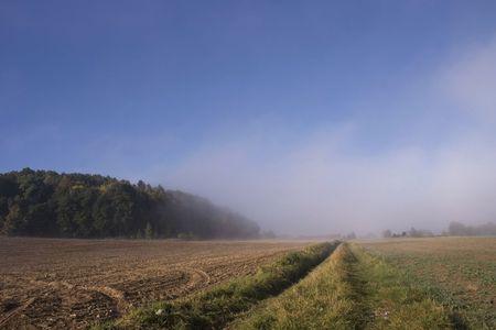 trembling: Landscape in fog