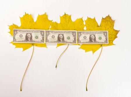 Autumn dollar