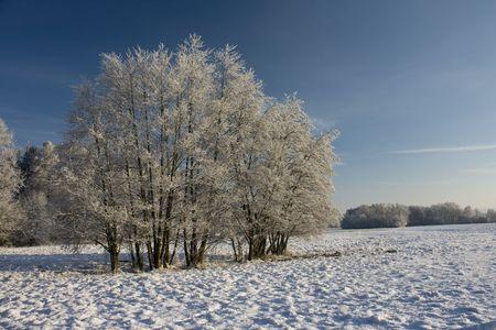 Winter in field