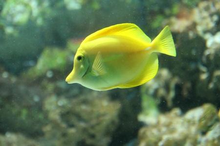 fish Stock Photo - 10353846