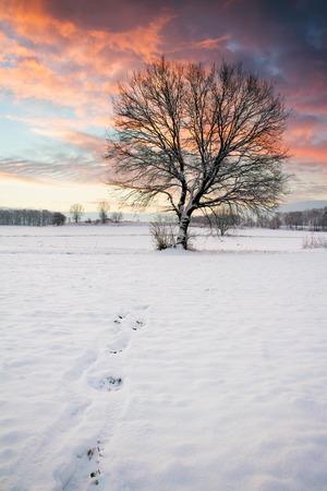 Alone tree Stock Photo