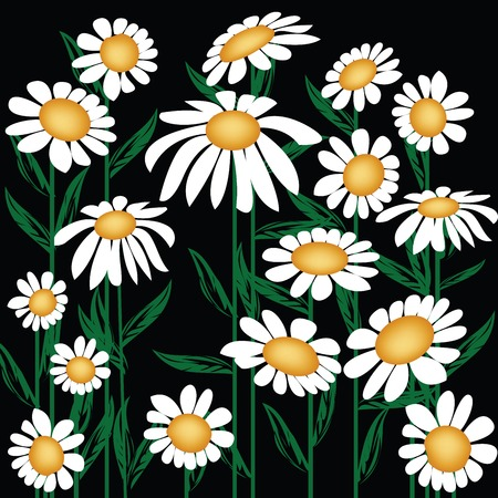 oxeye: Floral background with oxeye daisy