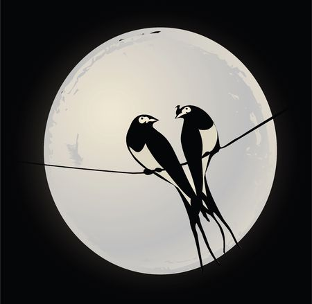 Birds on a wire photo
