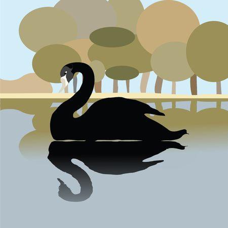 Black swan on a lake, romantic background illustration illustration