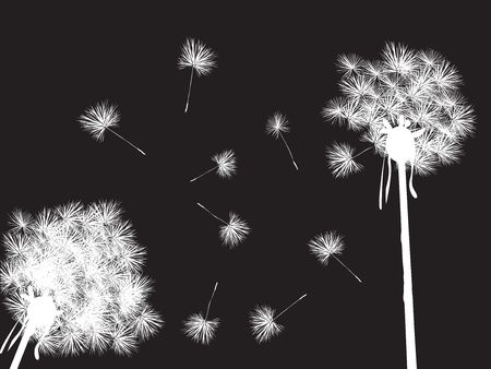 Dandelions in the night, desktop background Stock Photo - 6195041