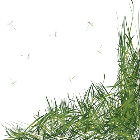 blown: Grass leaves with dandelion stems in the wind Illustration